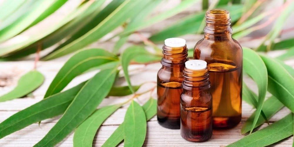 Dầu khuynh diệp có tác dụng làm giảm các triệu chứng của bệnh cảm lạnh, viêm xoang, hen suyễn