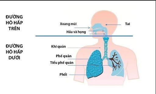 Viêm đường hô hấp trên và dưới là những bệnh lý gây ho phổ biến cho trẻ sơ sinh