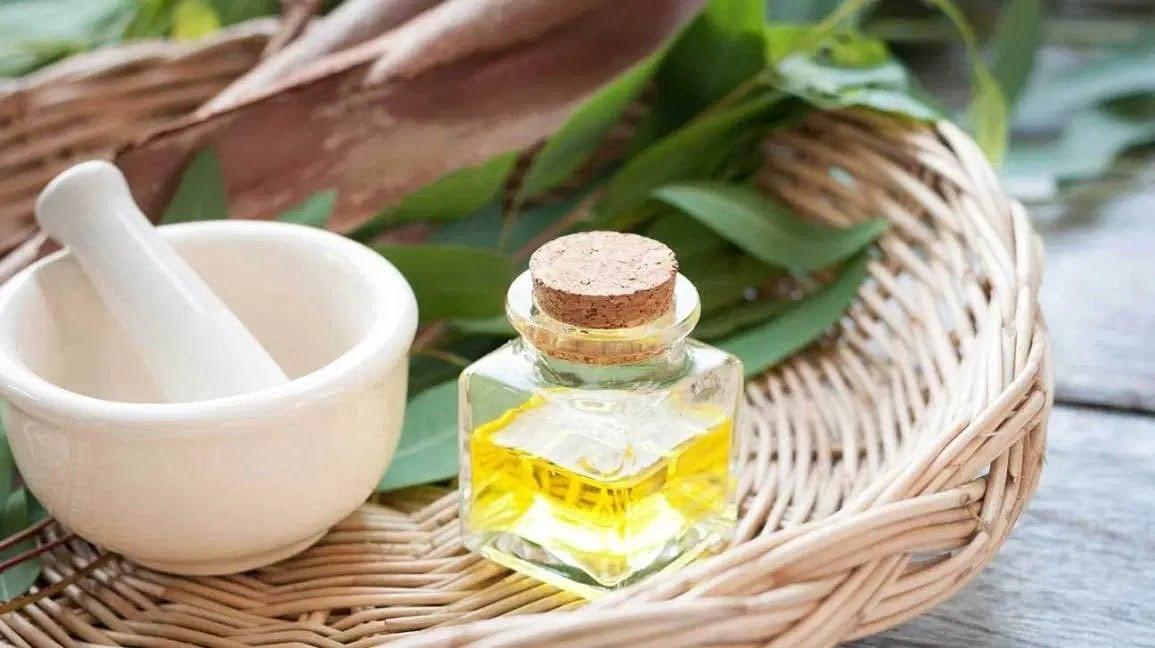 Sử dụng dầu bạch đàn xông hơi, massage, tắm giúp trị ho, ngăn ngừa cảm lạnh
