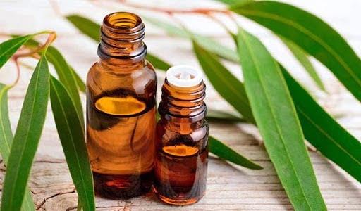 Tinh dầu khuynh diệp làm dịu họng, giảm ho